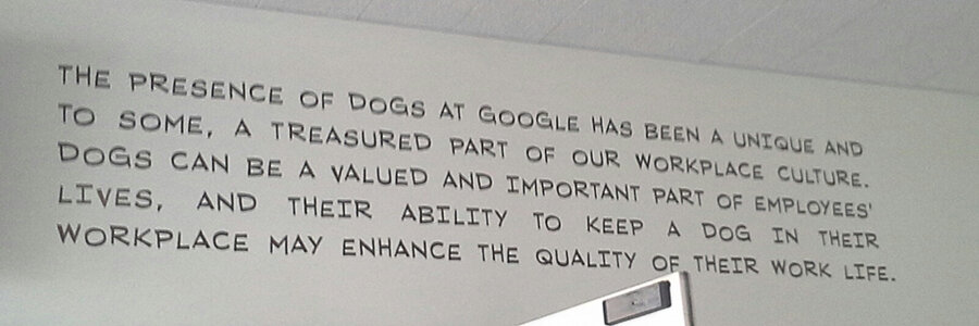 Google is dog friendly