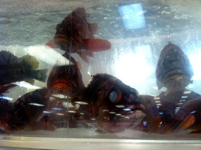 Live fish 99 Ranch Market Las Vegas