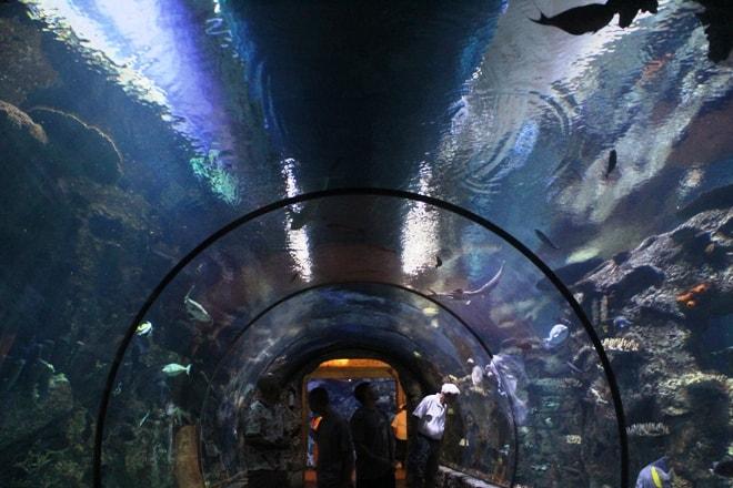 Shark tunnel aquarium Mandalay Bay shark reef