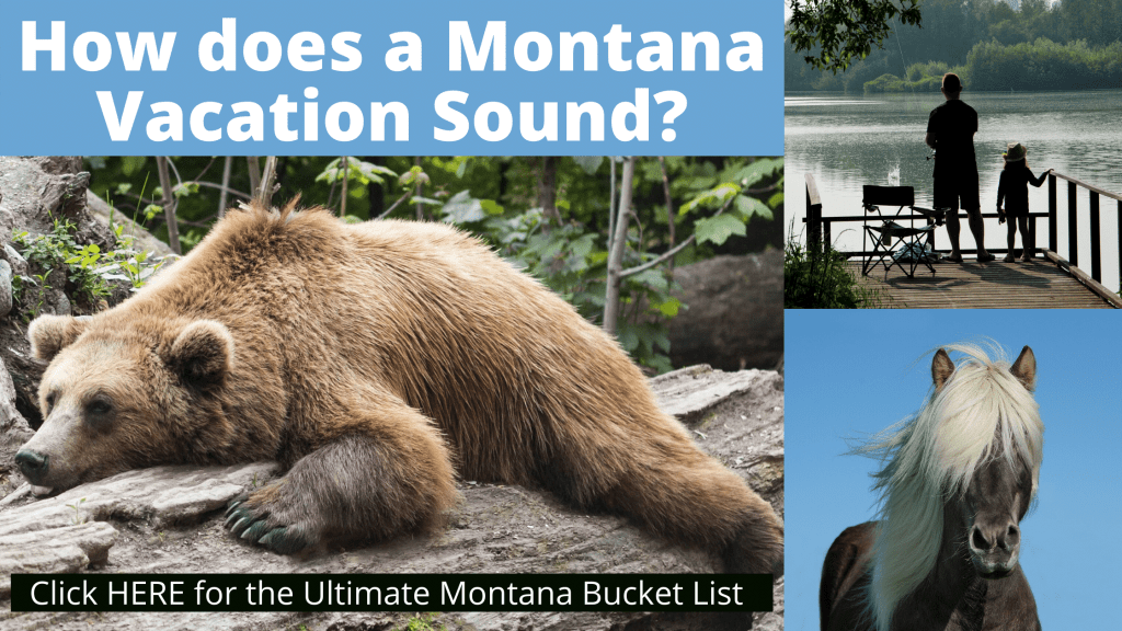 How to Get a Us Passport Expedited Article - Montana Bear Collage Image