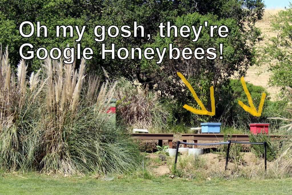 Google honeybees