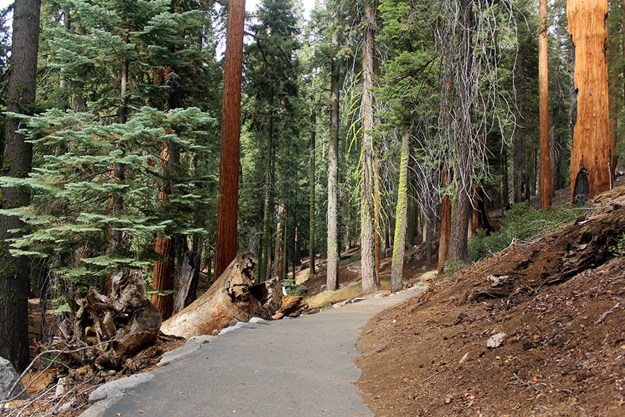 Congress Trail in Sequoia National Park