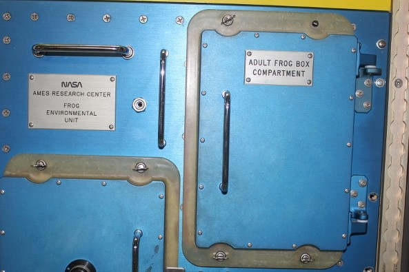 Adult Frog Box Compartment on the ISS