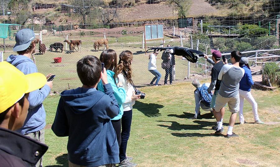 condor flying 4