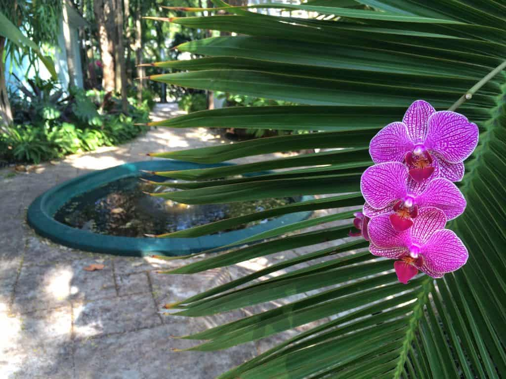 Roam Coliving Miami - Orchids in the garden