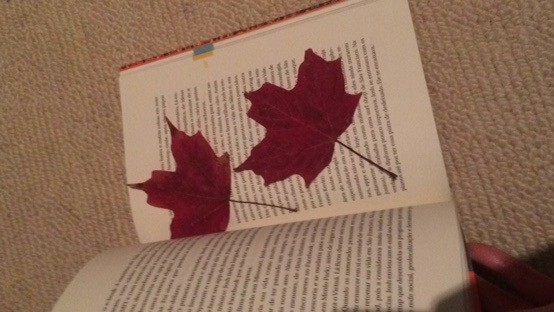 Free things to do in Toronto - Pick up fallen maple leaves