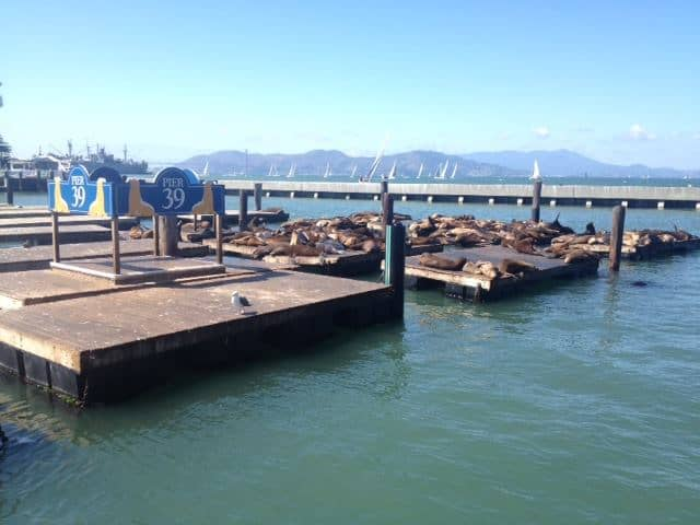 San Francisco Itinerary - Sea lions of Pier 39