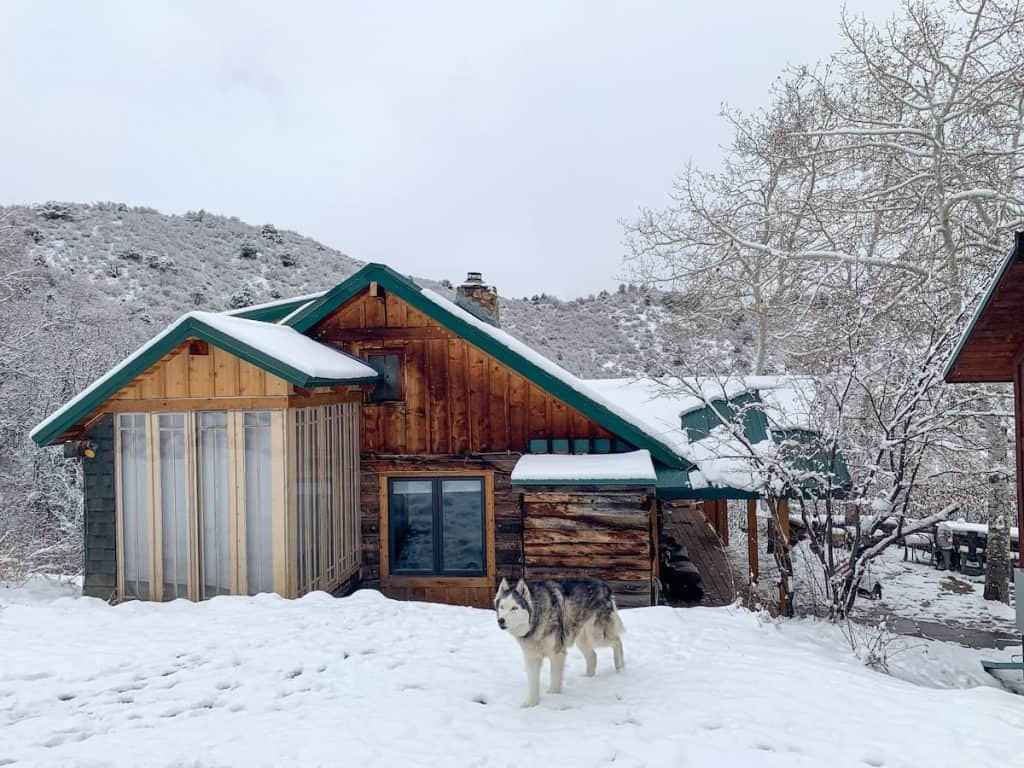 exterior of cabin in aspen with snow on the ground and a dog